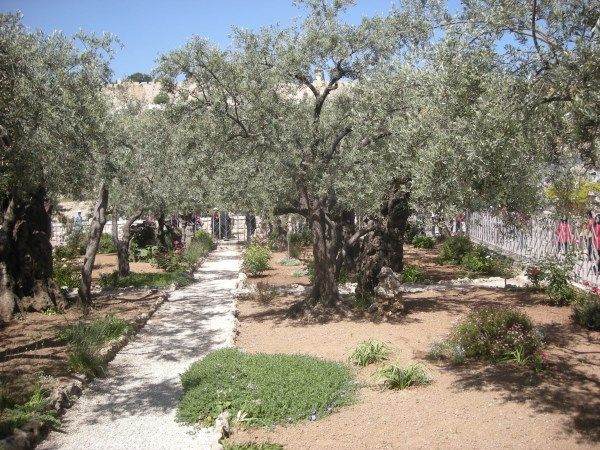 Garden of Gethsemane - Holy Land Tour