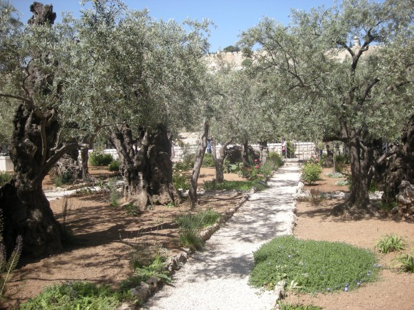 Garden of Gethsemane - Tours of the Holy Land
