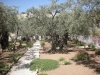 Garden of Gethsemane - Holy Land Tour