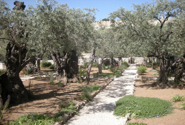 Garden of Gethsemane - Home Page - Holy Land Tours