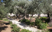 Visit the Garden of Gethsemane - Holyland Tours