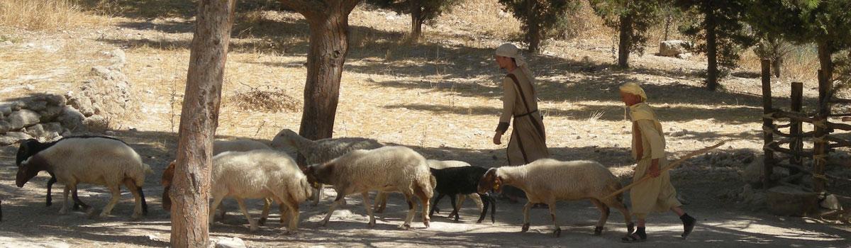 nazareth village - Visit Nazareth & the Nazareth Village - Tour the Holy Land